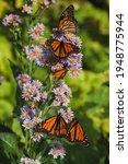 Bright Orange Butterflies...