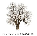 autumn naked tree on white | Shutterstock . vector #194884691