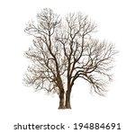autumn naked tree on white | Shutterstock . vector #194884691