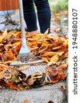 Orange Fallen Leaves In The...