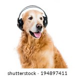 Red Retriever With Headphones...