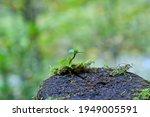 Green Plant Is Vigorously...