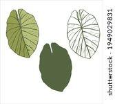 Tropical Leaf Nephthytis Or...