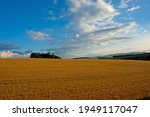 Wheat Field Shining In The...