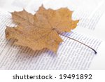 open book with yellow autumn... | Shutterstock . vector #19491892