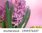 close up of beautiful spring... | Shutterstock . vector #1949376337