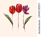 red hand drawn tulip flowers... | Shutterstock .eps vector #1949378557