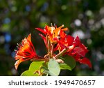 Decorative Brick Red Flowers Of ...