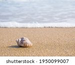 Small Seashell On The Beach In...