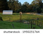 Rural scene of dairy farm pastures with a windmill in Ferndale, Gippsland, in the Strezelecki Ranges, near Warragul, Victoria, Australia.