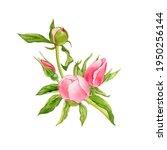watercolor drawing bouquet of... | Shutterstock . vector #1950256144