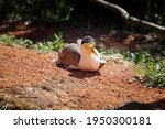 Animal And Bird Portrait Of...