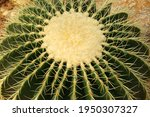 Closeup Green Cactus Plant Or...