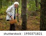 Senior Man Collecting Mushrooms ...