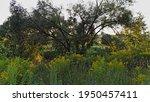 Yellow Flowers On Green Meadow...