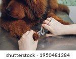 Close Up Of Cutting Dog Nail...