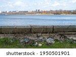 nikolaev  ukraine   06 april... | Shutterstock . vector #1950501901