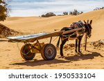 A Donkey With An Empty Cart...