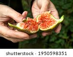 homemade ripe  juicy and...   Shutterstock . vector #1950598351