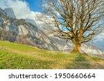 spring landscape in the alps... | Shutterstock . vector #1950660664