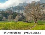 spring landscape in the alps... | Shutterstock . vector #1950660667