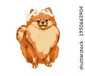 fluffy pomeranian dog sits.... | Shutterstock .eps vector #1950663904