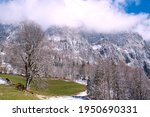 spring landscape in the alps... | Shutterstock . vector #1950690331
