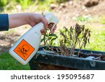 woman's hand holding spray bottle and spraying plants - stock photo