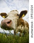 funny portrait of a cow | Shutterstock . vector #19511014