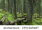 Fallen Trees In Mossy Forest