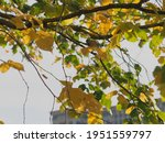 Banner Gnarled Branch With...