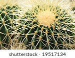 Cactus Sharp Spikes Closeup