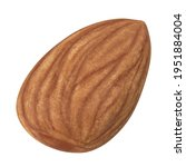 almond isolated. almonds on... | Shutterstock . vector #1951884004