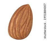 almond isolated. almonds on... | Shutterstock . vector #1951884007