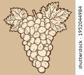 bunch of grapes. sketch scratch ... | Shutterstock .eps vector #1952044984