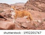 small orange stray cat walking... | Shutterstock . vector #1952201767