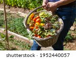 Gardener Holding A Basket Of...