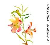 watercolor lilies. blooming... | Shutterstock . vector #1952554501