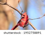Handsome Bird Feathers Beak...