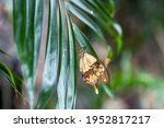 Butterfly In Tropical...