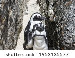 African Penguin On The Beach In ...