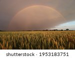 Wheat Field With A Whole Rainbow