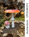 Big And Small Red Toadstool....