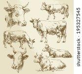 Cow  Cows  Farm Animals