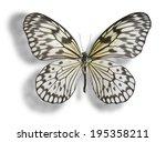 Butterfly  Idea Leuconoe  Pape...