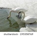 Geese In Sea  Orangeville ...