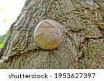 A Big Snail On A Tree