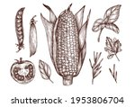 Culinary Illustration With A...
