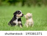 Stock photo dog and cat 195381371