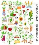 agriculture elements set ... | Shutterstock .eps vector #1954204504